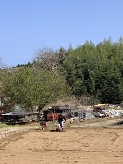 4月7日の田山建設・シンボルツリーはアオダモです