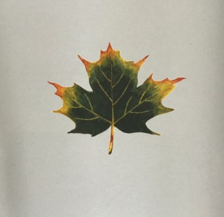木のはなし~ハードメープル