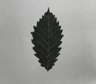 木のはなし~オーク