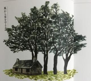 風から家を守る木